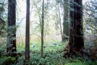 hochbaum1